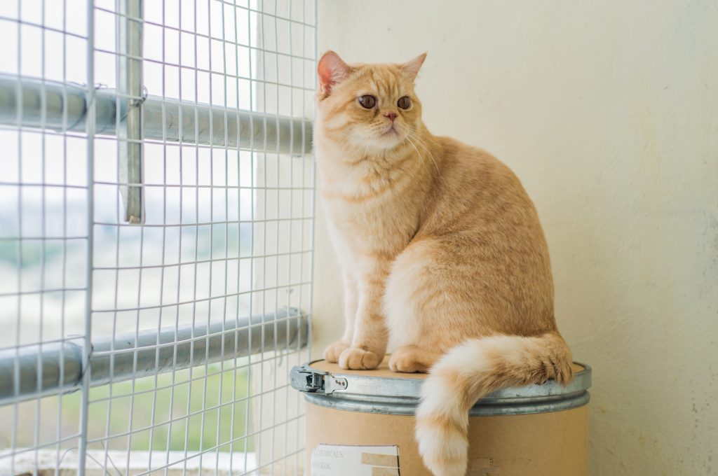 Copyright: Meadow Green Cattery, PR4 3PE